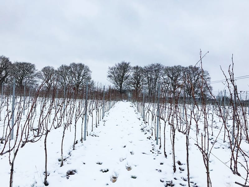 Blog_wintertime in the vineyard at Roebuck Estates
